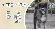 秋田犬在舎犬情報