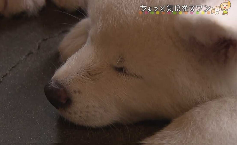 ABS秋田放送「えび☆ステ」で能代幸寿荘が特集されました