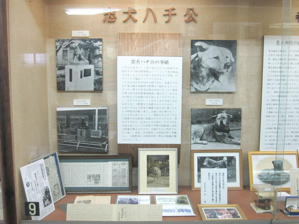秋田犬保存会内観1