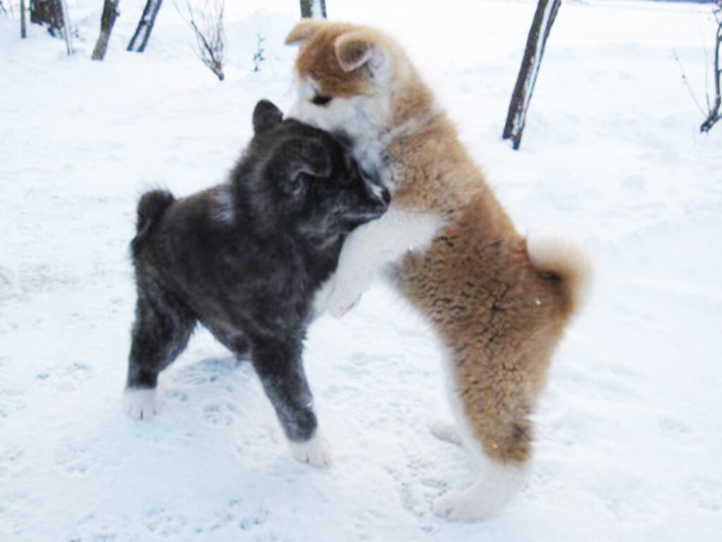 雪上の子犬